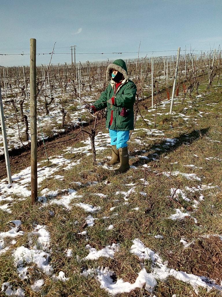 Descente des bois dans les vignes